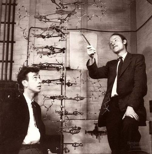 découverte de l'ADN